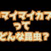オキマイマイカブリってどんな昆虫?島根県隠岐諸島に生息するマイマイカブリ
