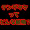 毒キノコ【テングタケ】死亡例もある絶対に食べてはいけないキノコ!公園に生えている