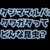 ウケジママルバネクワガタの生態や特徴を大紹介!採集禁止の絶滅危惧種!