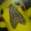 エビガラスズメの特徴や生態について大紹介!かわいいスズメガさんです!