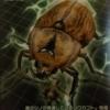 アヌビスゾウカブト生態や特徴を大紹介!ムシキングに登場したカブトムシ!
