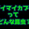 マイマイカブリの生態や特徴を大紹介!実は毒を持っている日本だけでなく海外で人気の
