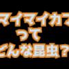 アオマイマイカブリってどんな昆虫?新潟県粟島(あわしま)に生息するマイマイカブリ