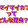 サドマイマイカブリってどんな昆虫?新潟県佐渡島に生息するマイマイカブリ