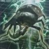 ヒメカブトの生態を紹介!日本での飼育が禁止のカブトムシ!